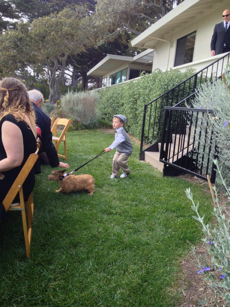 ring bearer ideas dog