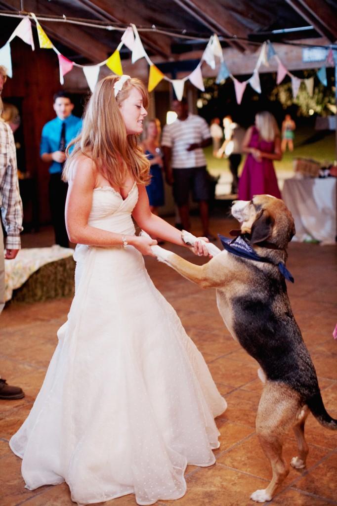 Dogs Wedding Reception