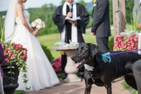 dog wedding ideas video
