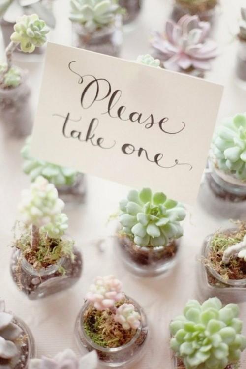 DIY Wedding Favor Succulents