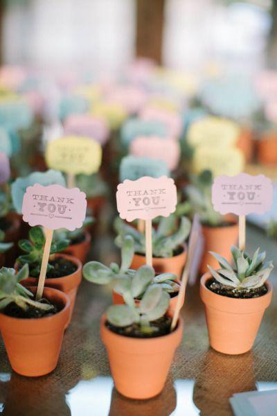 Plants wedding favour
