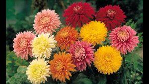 Summer Flower Bouquets - Chrysanthemums