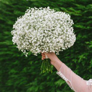 Summer Flower Bouquets - Gypsophila