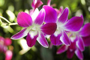 Summer Flower Bouquets - Singapore Orchids