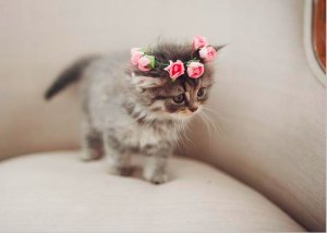 cat flower crown wedding DIY with instructions