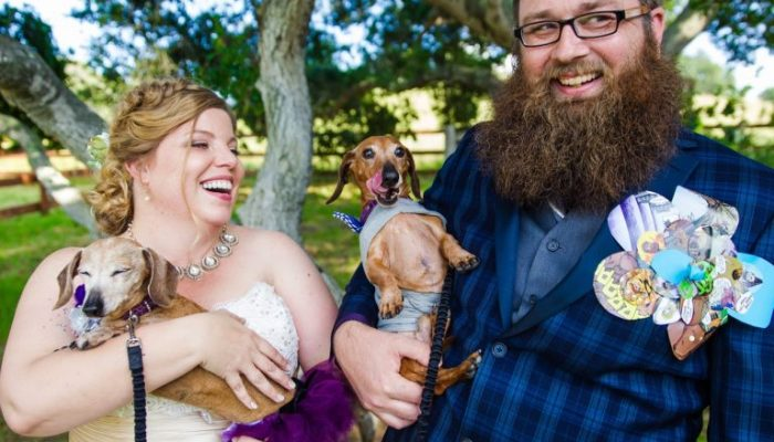 How to Include Your Fur Babies in Your Wedding Day